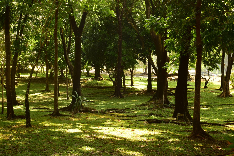 Mini-Forest Park